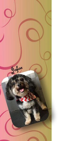 Sheree S Dog Rescue